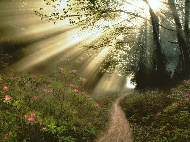 Walking in Light, a sermon by Colin Dye